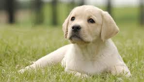 Άδεια Κατοχής Σκύλου